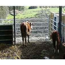 High Resolution Cow Calving Camera over O2 3G